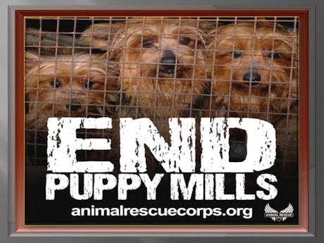 HSUS, CEASAR MILLAN, AND PUPPY MILLS