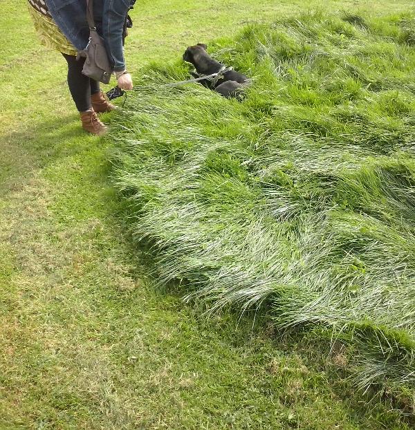 hoog gras staan