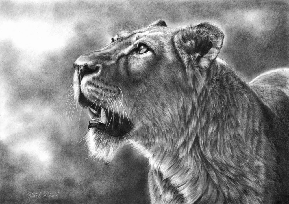 10-Matriarch-Complete-Hyper-Realistic-Wildlife-Peter-Williams-www-designstack-co