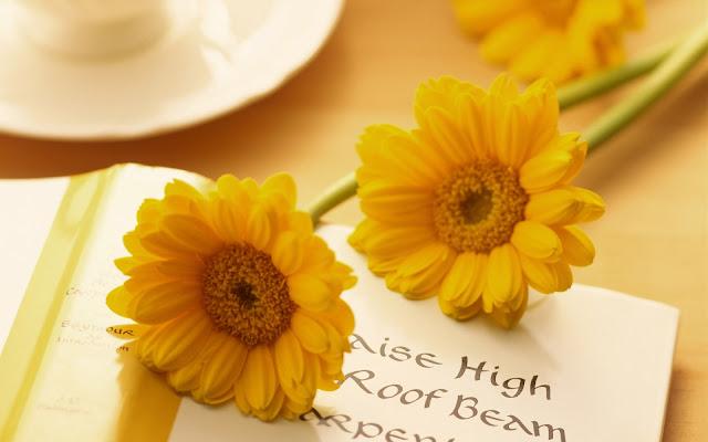 Hình ảnh hoa đẹp 07