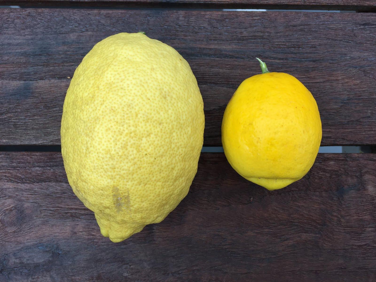 citrus enthusiast meyer lemons vs regular lemons