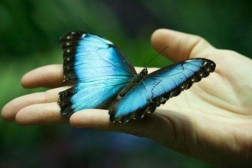 К чему во сне ловить и поймать бабочку руками, брать в руки?