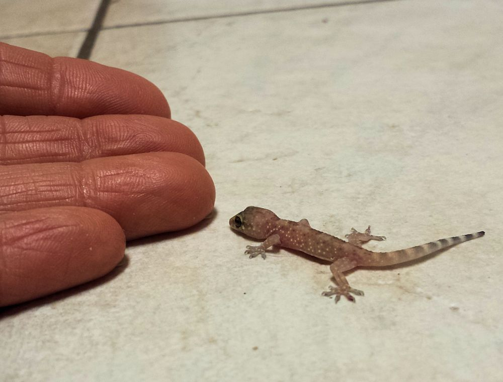 how to keep baby lizards out of my house