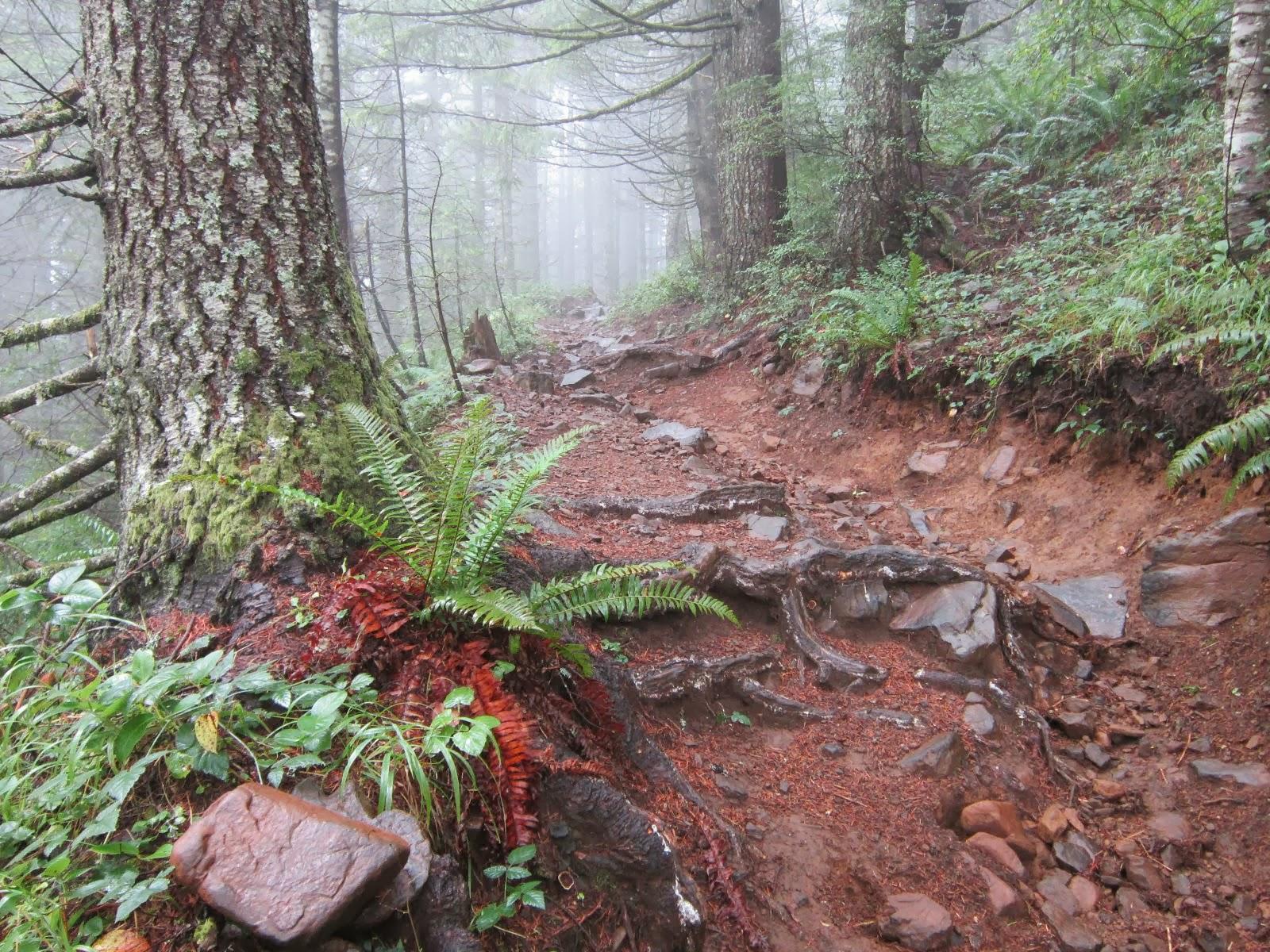 Capitol Peak Trail