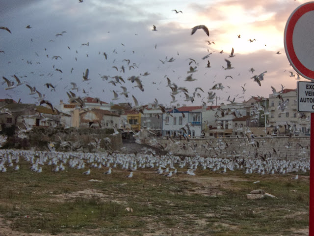 Seaguls and weather