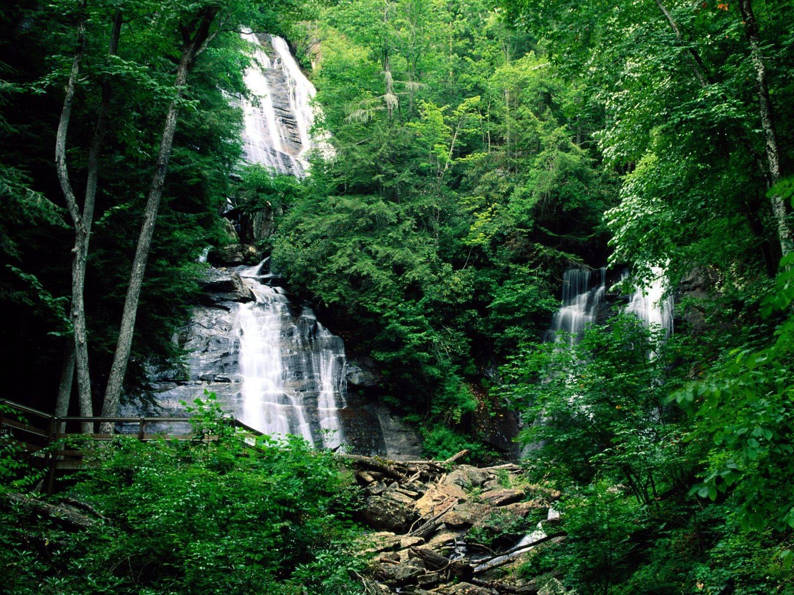 http://2.bp.blogspot.com/-SvdlWbj9_E0/TqOtIv561OI/AAAAAAAAAW0/AYPtqhC_7po/s1600/hutan-alam.jpg