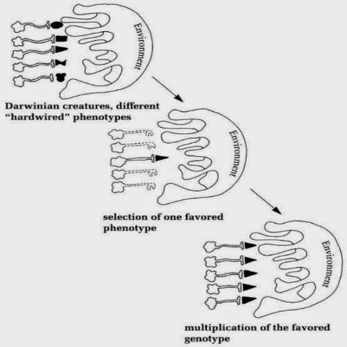 biodiversity reaction paper