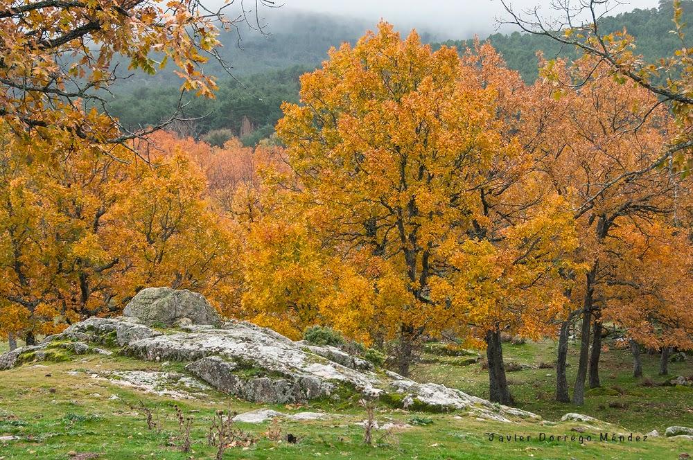 Un otoño para enmarcar | Un blog para mis fotos