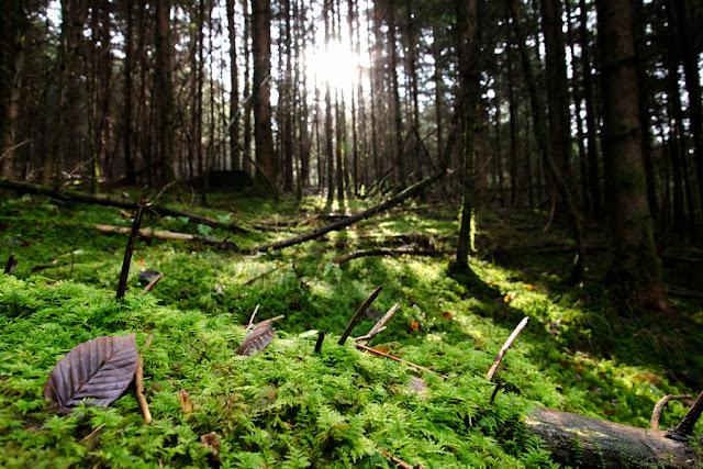 Dolenjski gozd, Dolenjska, Novo Mesto, gozd