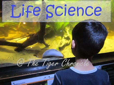 http://thetigerchronicle.blogspot.co.uk/search/label/science-life