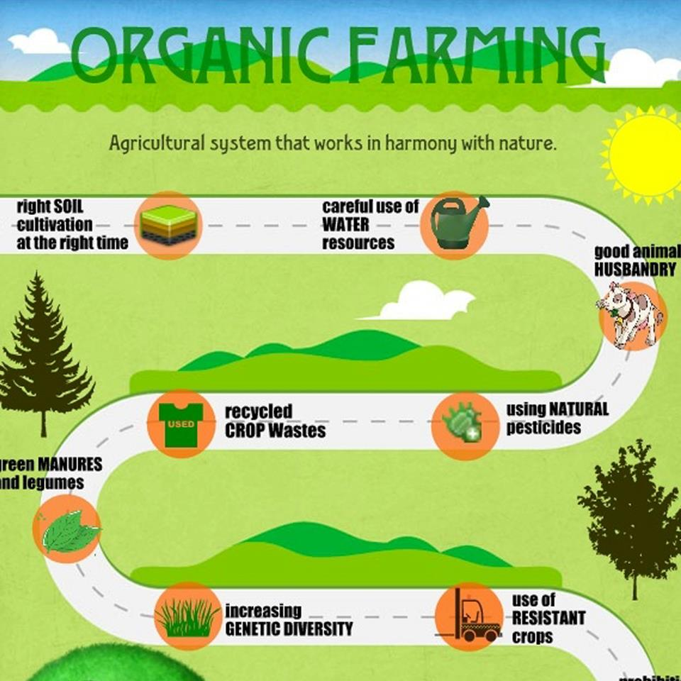 un report says small-scale organic farming only way to feed the