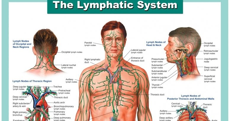 Eat Red: Lymph Cleansing Foods