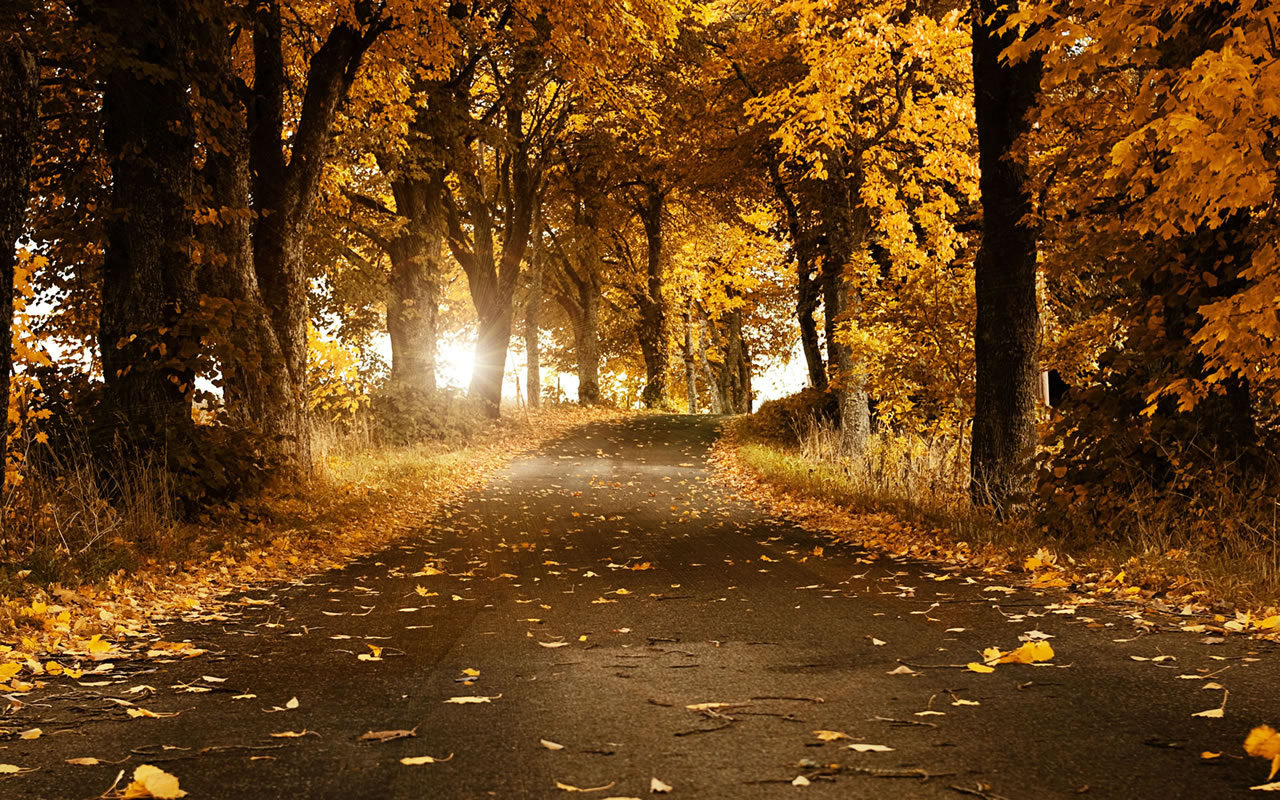 http://2.bp.blogspot.com/-SwPqSD4jIqg/UEjlZ5EkAJI/AAAAAAAABeY/kU66doW-Cpk/s1600/beautiful-autumn-wallpaper-1280x800-1008098.jpg