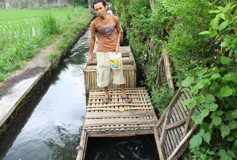 7 Contoh Usaha di Kampung/Desa Menjanjikan