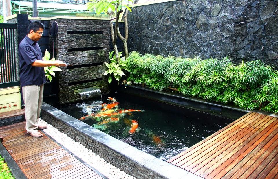 Tips cara membuat kolam koi bersih dan sehat dunia akuarium for Koi 1 utama