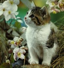 Gambar anak kucing di halaman rumah