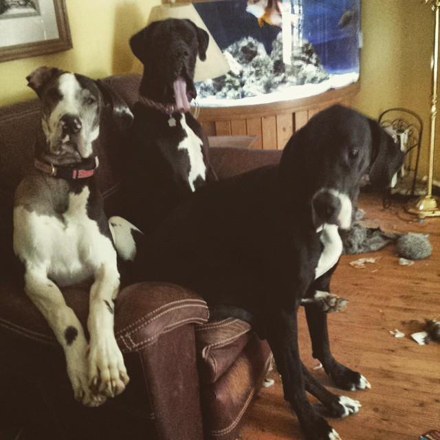 My Three Danes