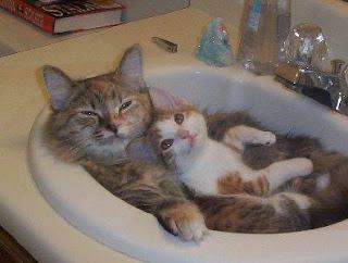 Cara memandikan kucing, cara membersihkan telinga, grooming, Membersihkan mata, Memotong kuku, Menggrooming kucing, merawat kucing