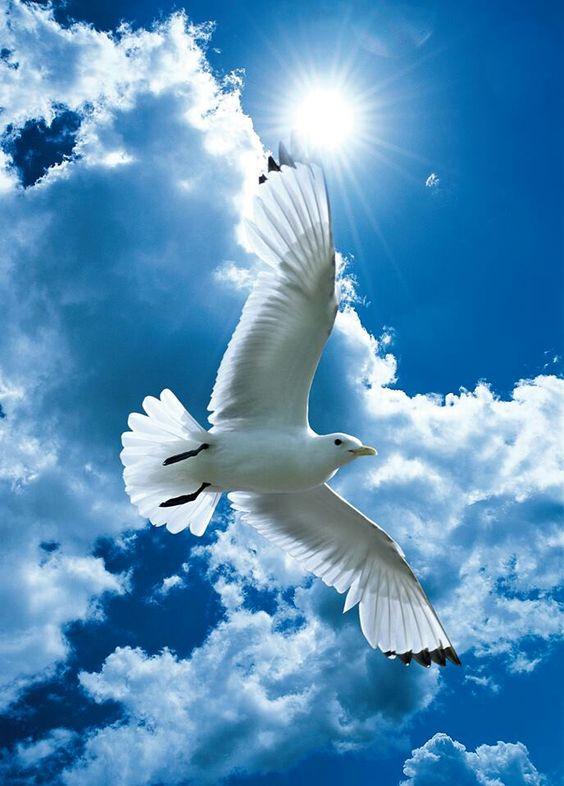 Paz no mundo!