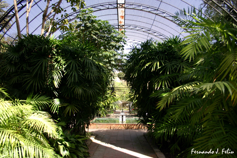 Naturaleza y medio rural jard n bot nico de valencia - Jardin botanico valencia ...