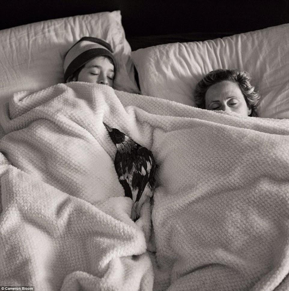 ينام  الغراب مع العائلة على السرير
