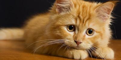 Inilah 3 Sebab Kucing Mendatangi Rumah Kita