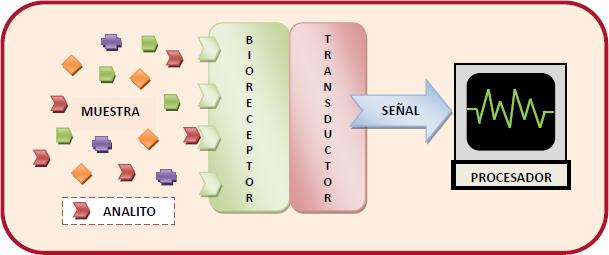 Esquema de la estructura general y funcionamiento de un biosensor