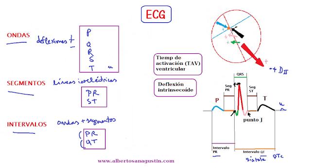 electrocardiograma, ondas, segmentos, intervalos