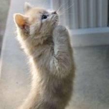 Kucing Comel, Kucing Merayu, Berat Blog, Timbang Berat Blog, Blog Berat, Penimbang Berat