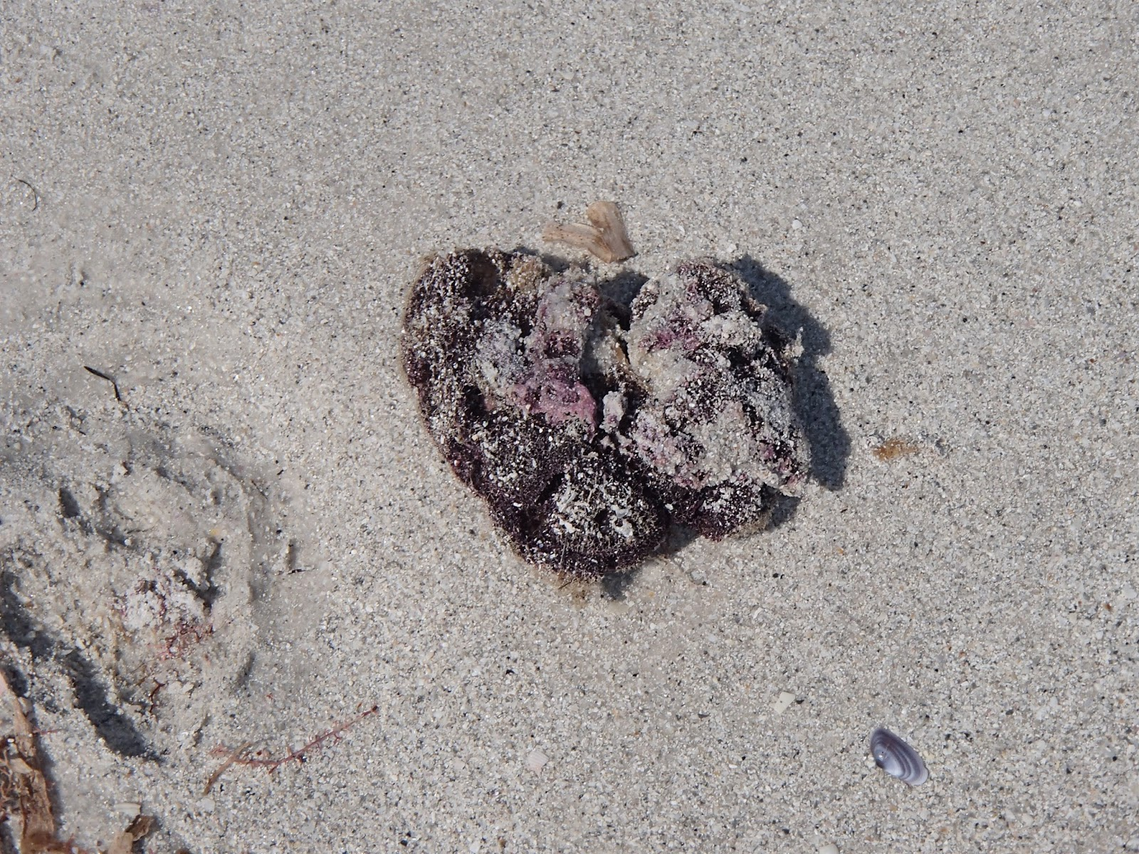 Seaweed & Sand Heart | Navigating Hectivity by Micki Bare