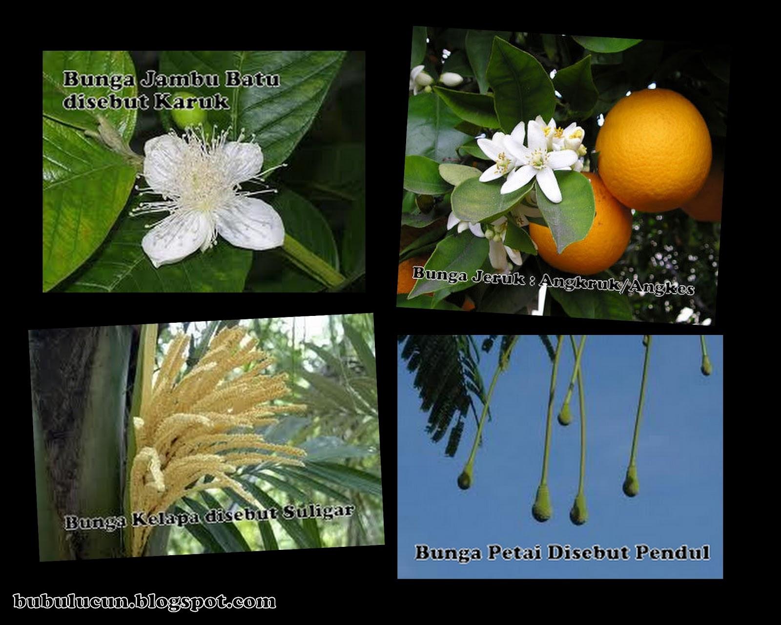 Nama-nama bunga tanaman dalam bahasa Sunda