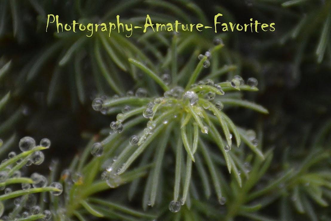 Photography Amateur Favorites