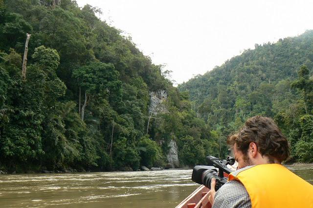 Yuk Selamatkan 1,2 Juta Hektar Hutan Aceh