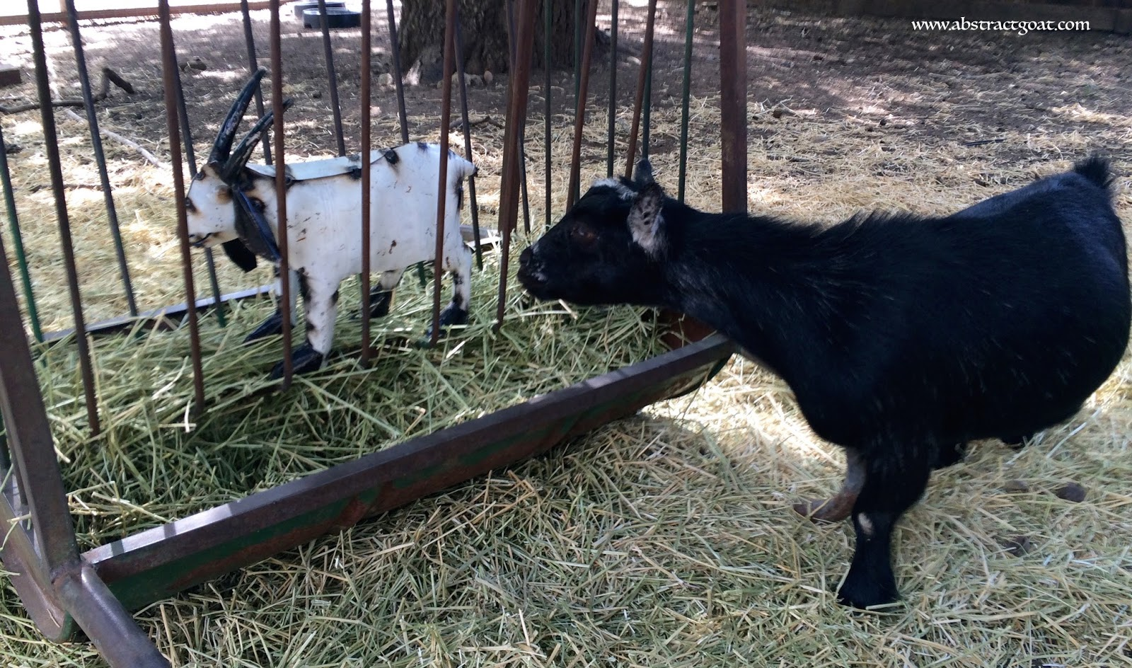 since made quality american hay bunk farm goat products rack with feeder and ranch tarter equipment
