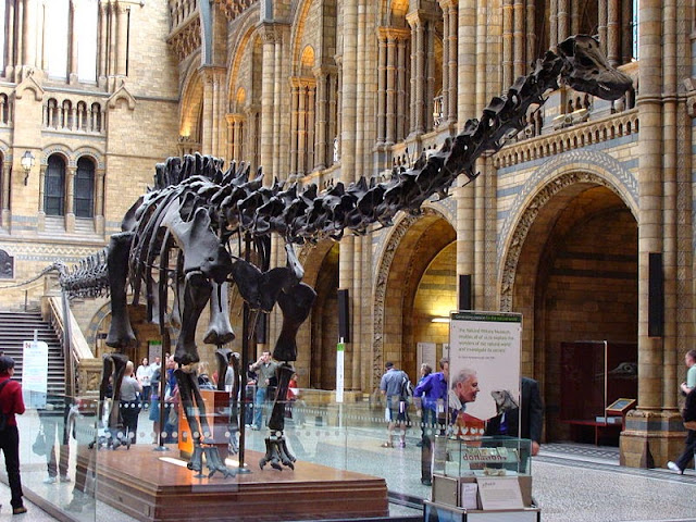 Natural History Museum, Central Hall, Diplodocus Dinosaur - London, UK | Travel London Guide