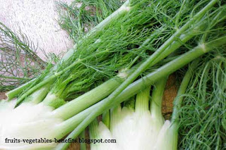 benefits_of_eating fennel_fruits-vegetables-benefits.blogspot.com(12)