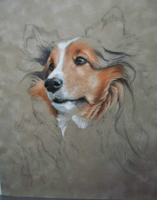 Pastel painting of Shetland sheepdog portrait by Colette Theriault