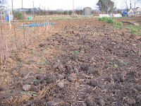 manure spread strawberry patch