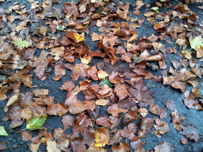 Focus on Life: Week 35 ~ Growth and Change: Fall has come! :: All Pretty Things