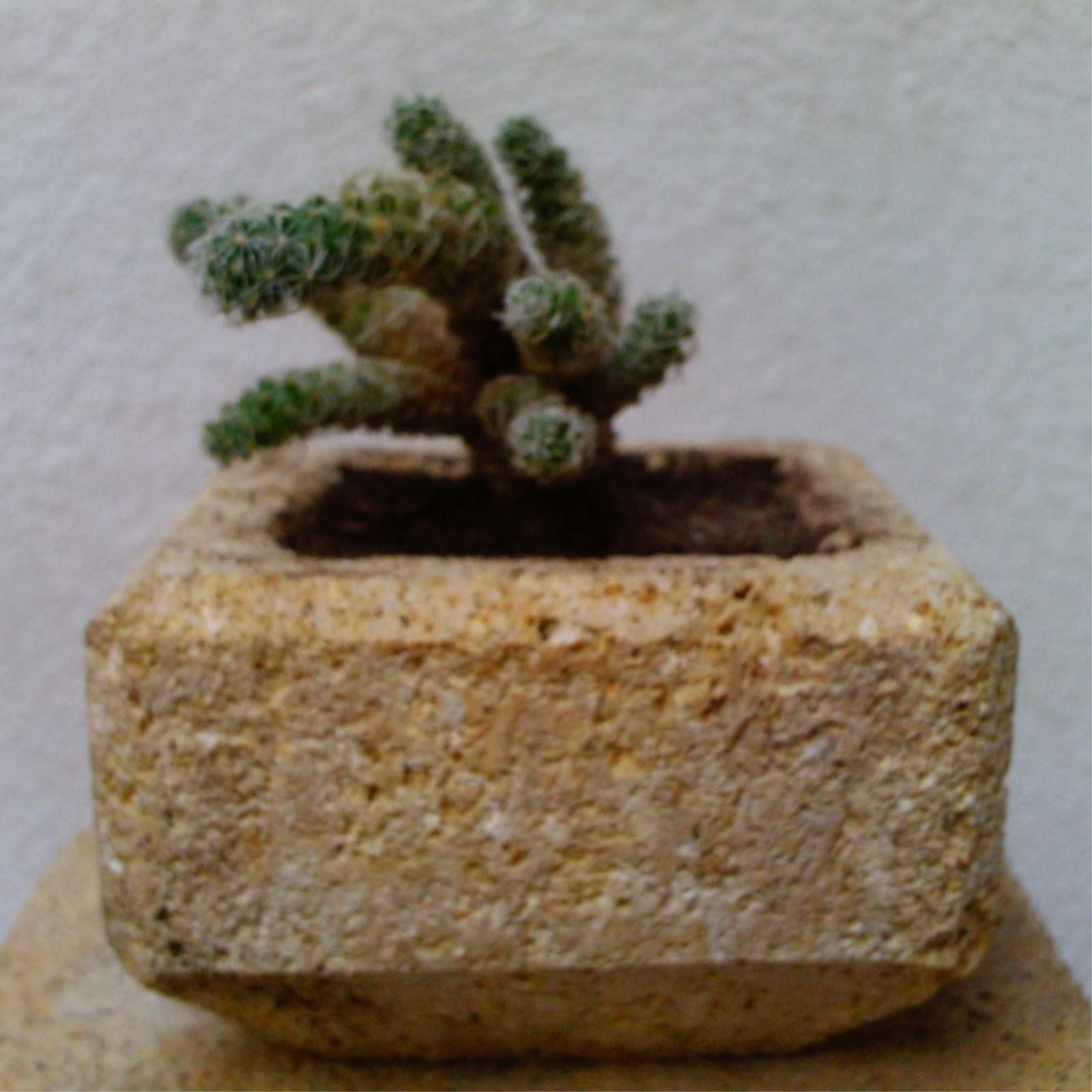 Artesan a en piedra natural ram n y su escalfilador - Cactus en macetas pequenas ...