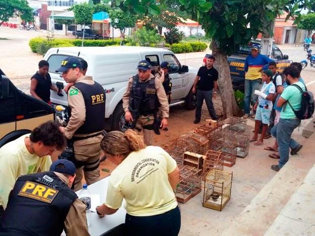 Operação integrada de combate ao tráfico resgatou 870 animais (Foto: Divulgação/PRF)