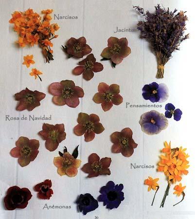 nombre de flores secas para arreglos de On nombres de flores comunes