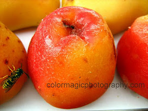 Marzipan fruits-apples