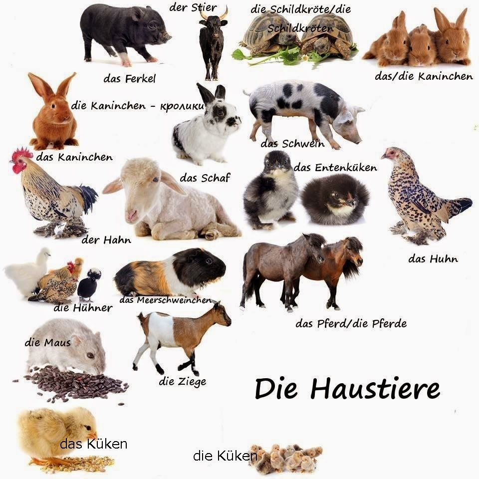 Die Haustiere German For All Deutsch Für Alle
