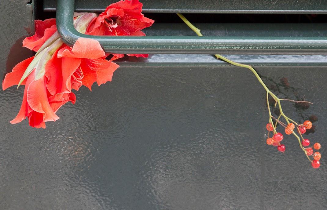 orange gladioli in dumpster