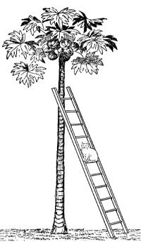 Задача про кошку на лестнице