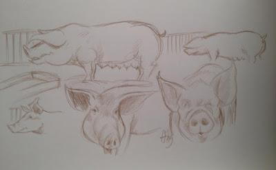 Les croquis et premières réalisations pour le reportage de Fakir sur l'élevage porcin. Guillaume Néel©