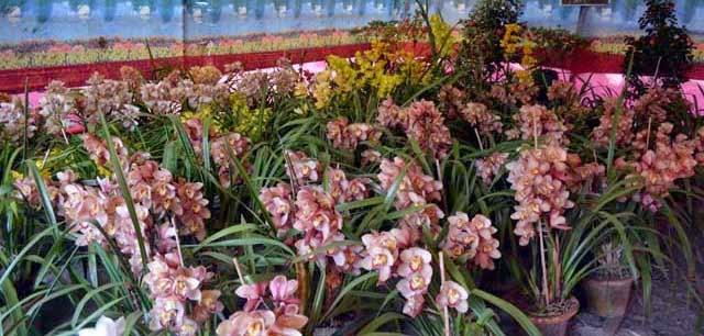 tourists in Mungpoo Cymbidium Orchid Park