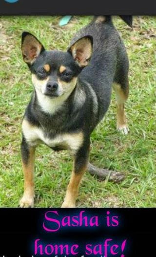 Lost and Found Pets Dogs Cats Pensacola