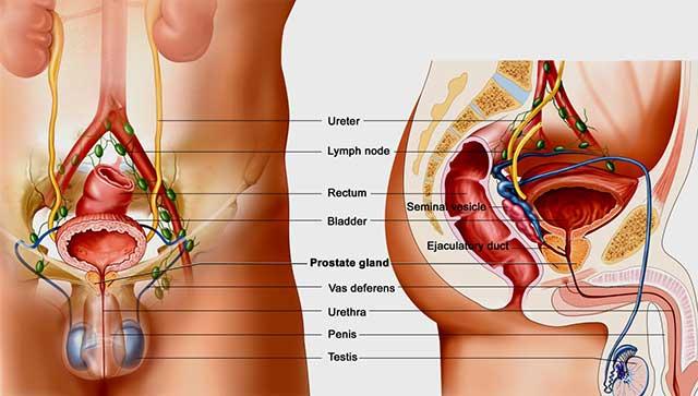 Penderita kanker prostat wajib konsumsi lemak nabati